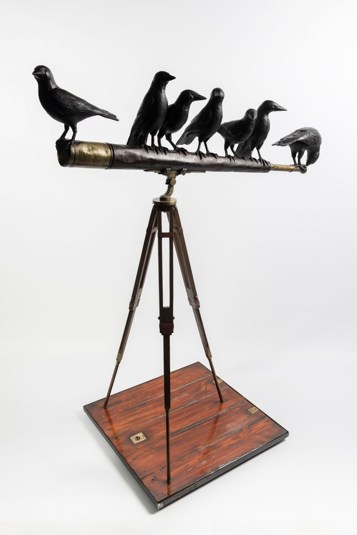 Martin Norman 'Crows on a Telescope'